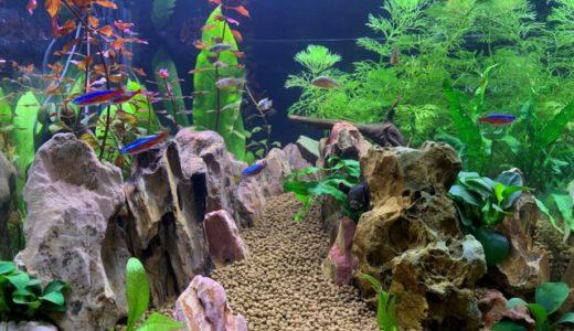 第3の水とは?岡山理科大学が開発した海水でも淡水でもないどんな魚でも大きく育つという不思議な水。