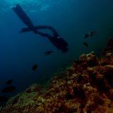 枝手久島のアクセス(行き方)、釣り、ダイビングに最適な大自然の島!