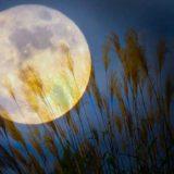中秋の名月は2021年9月21日!十五夜に秋の七草を飾ろう!